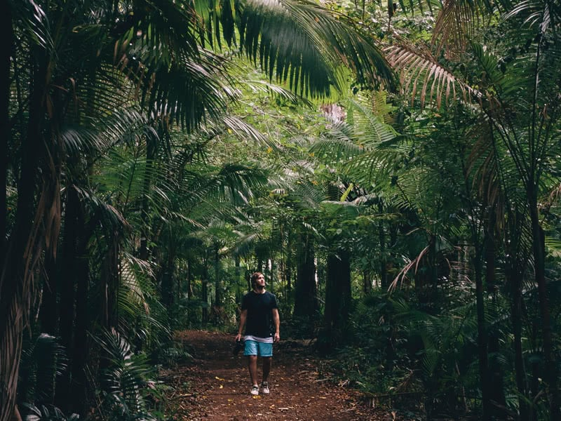 A man walking through a rainforest trail in Conway National Park
