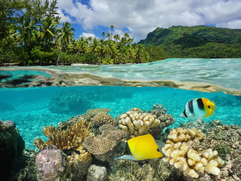 Marine wildlife and coral reef in the Whitsundays