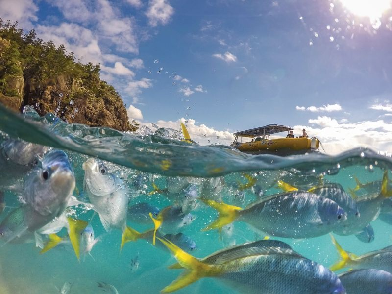 A school of fish at Mantaray Bay with Ocean Rafting vessel