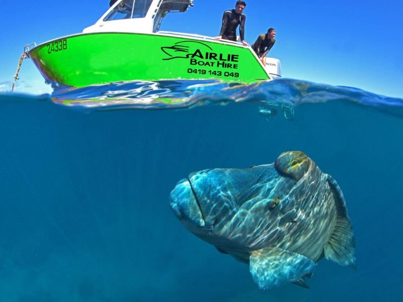 A humphead Maori Wrasse under the surface next to a green motor boat from Airlie Boat Hire