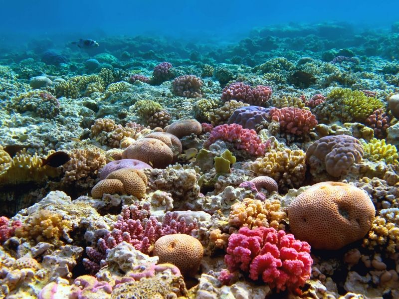 Brightly coloured coral reef on the Great Barrier Reef