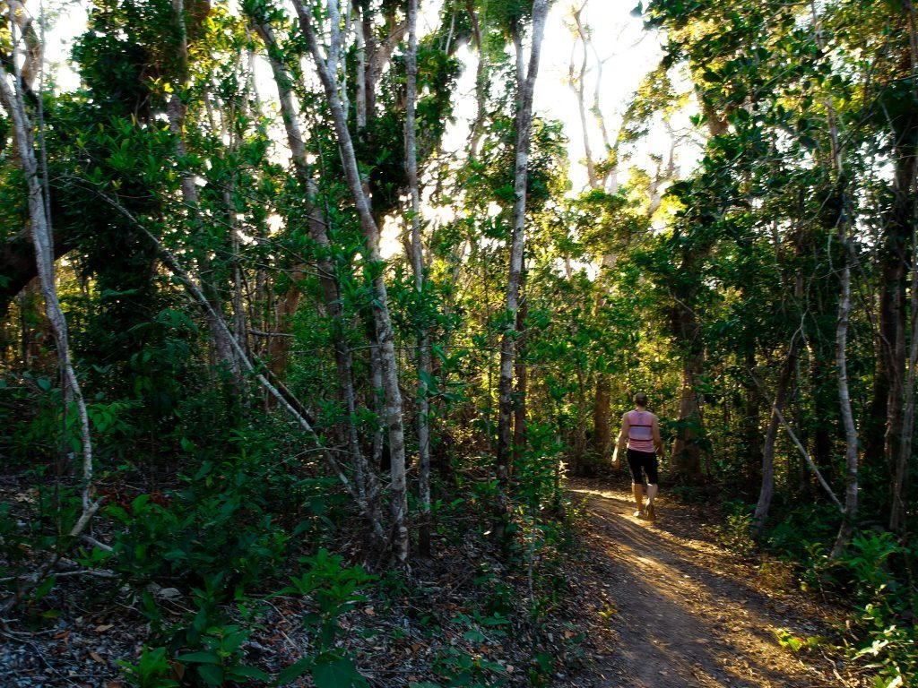 A woman hiking through a mainland rainforest trail in the Whitsundays