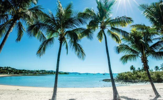 The Airlie Beach Foreshore including palm trees