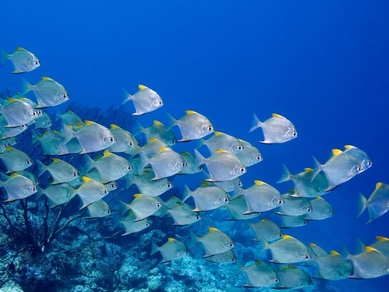 A school of fish with coral reef